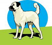 Anatolian Shepherd Dog Color.eps