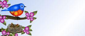 pic of bluebird  - Horizontal banner has orange and blue bird  - JPG