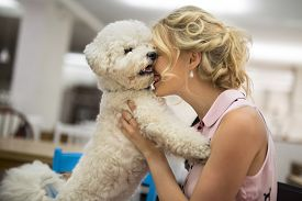 picture of bichon frise dog  - Girl in a restaurant embraces tenderly his white curly Bichon Frise dog - JPG