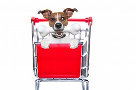 stock photo of bag-of-dog-food  - jack russell dog inside a shopping cart trolley behind a blank empty banner or placard with a bone in mouth isolated on white background - JPG