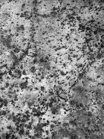 stock photo of rusty-spotted  - Texture with spots for design image - JPG