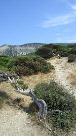 stock photo of juniper-tree  - Green juniper grove and crooked pine tree mountain landscape - JPG