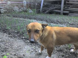 stock photo of tarzan  - this is my dog - JPG