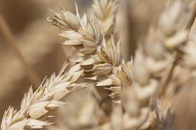 foto of carbohydrate  - Macro photography of the grain - JPG