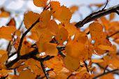 Closeup Fall Leaves