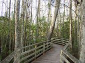 Florida Cypress Swamp 2279 poster