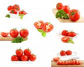 Collection of tomatoes