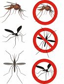 stock photo of mosquito  - dangerous insect vector of viral diseases  - JPG