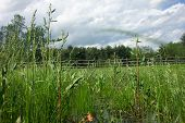 pic of marshlands  - A Marshland in Riverbend Park in Findlay - JPG