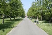stock photo of bute  - a converging path in bute park cardiff wales - JPG