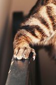Closeup Macro Of Sharp Large Cat Claws Paws Scratching Wooden Black Surface Furniture At Home. Damag poster
