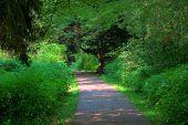 Green Path Way