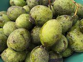 Horse Mango Fruits