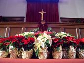 Poinsettias And Cross poster