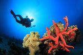 Coral, esponja, Scuba Diver