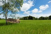 Asian Landscape With Ricefield