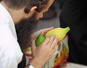 BNEI-BRAK, ISRAEL - SEPTEMBER 22: An orthodox Jew in black hat picks citrus before the holiday of Su