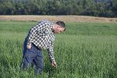 Farmer checking his crop