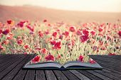 stock photo of suny  - Creative concept pages of book Beautiful landscape image of Summer poppy field under stuning sunset sky with cross processed retro effect - JPG