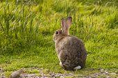 Rabbit sitting watching