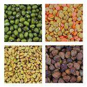 stock photo of fenugreek  - Different lentils and Fenugreek seeds - JPG