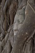 Buddha Sculpture Of Head In Bodhi Tree Of  Roots