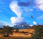 Magic cloud and flocks of Andean condors in southern Patagonia. Amazingly beautiful sunset illuminat