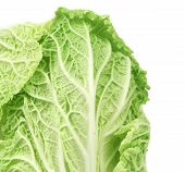 Close-up of fresh chinese cabbage