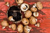 Fresh Portobello And Brown Agaricus Mushrooms