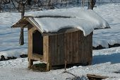 Doghouse in sunlight winter