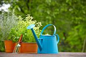 Outdoor gardening tools