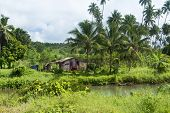picture of shacks  - Rustic old shack in the jungle rainforest in South East Asia with laundry and water supplied by a local pond filled by rainwater - JPG