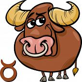 image of taurus  - Cartoon Illustration of Taurus or The Bull Horoscope Zodiac Sign - JPG