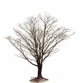 foto of dead-line  - out line of dry tree branch isolated white background use for decorated in nature and plant garden and parking out door field meadow - JPG