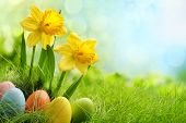 stock photo of easter decoration  - Easter eggs and daffodil flower on meadow - JPG