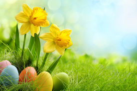 stock photo of daffodils  - Easter eggs and daffodil flower on meadow - JPG