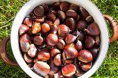 Pot Of Chestnut