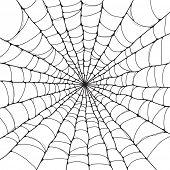 Isolated spider web