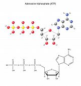 image of structure  - Structural chemical formula and model of adenosine triphosphate - JPG