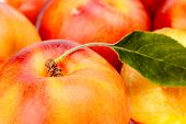 Background Made From Many Nectarines With Leaf