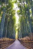 stock photo of bamboo forest  - Bamboo forest of Kyoto - JPG