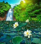 Lotus And Waterfall