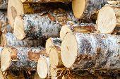 Pile Of Birch Timber Logs