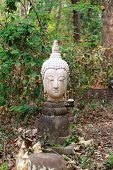 old white head of buddha in forest