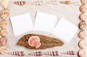 Sand Background With Blank Instand Photos And Shells