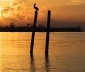 Pelican at Sunset