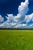 Plain Nature Grass Lawn