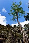 Ta Prohm Temple At Siem Reap, Combodia