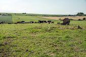 Fields With Animals