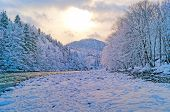 Winter River In Forest
